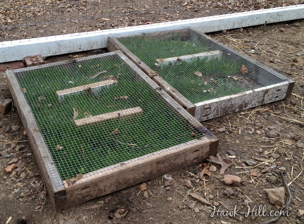 this frame with mesh top makes it easy to grow fresh greens even in a crowded chicken coop 27