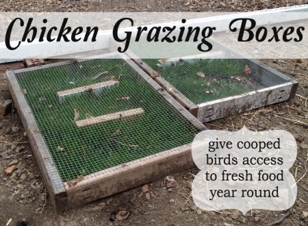 chicken grazing boxes