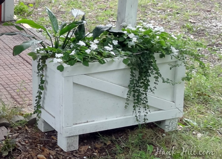salvaged shipping crate turned raised bed planter of mixed greenery & flowers