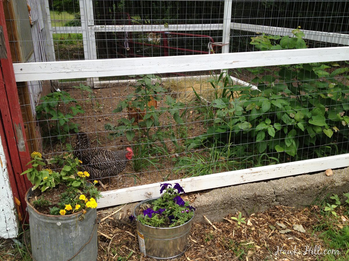 A restored 100 year old chicken coop with modern features added