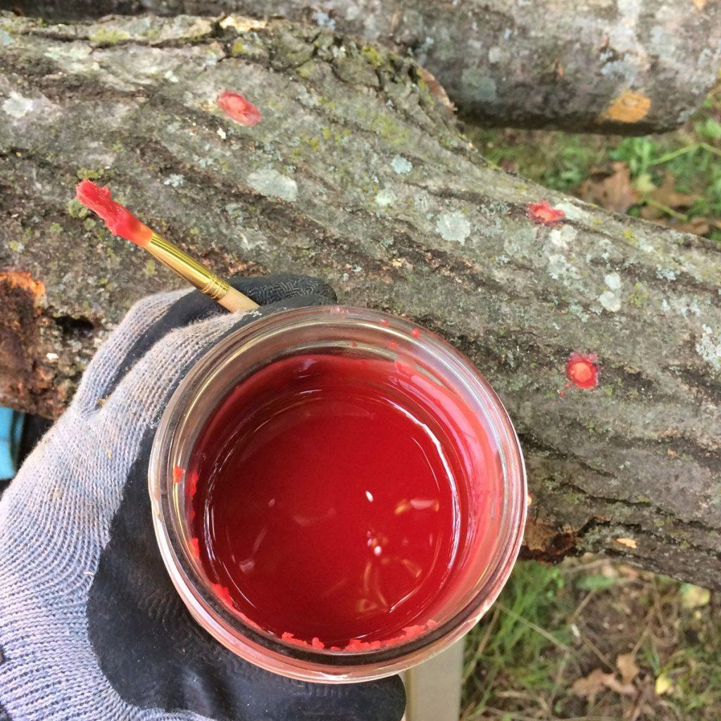 Waxing over mushroom plugs