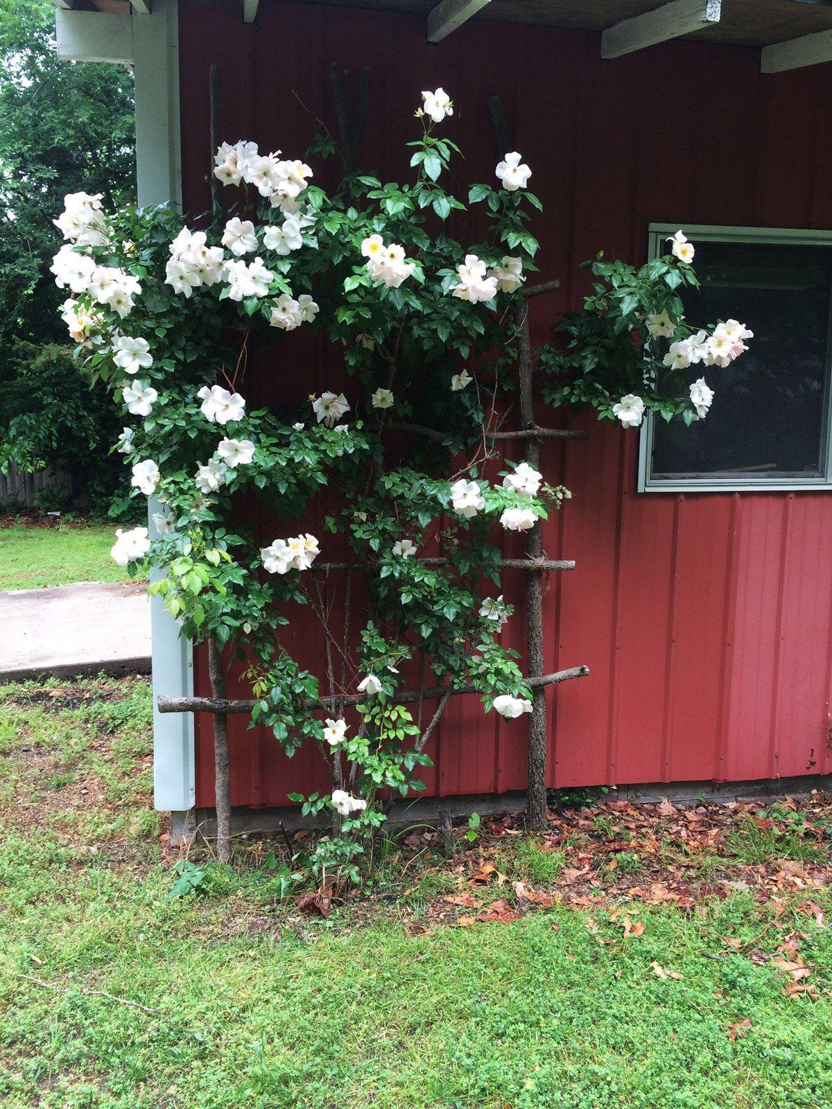 Climbing Rose Trellis Home Decor
