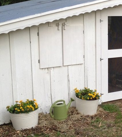 Cutting the exterior wall to add reach through nesting boxes to my chicken coop