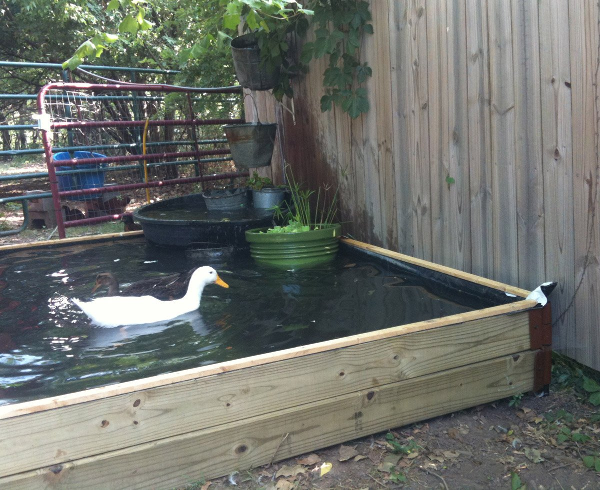 How to build a no dig backyard pond for under 70 hawk hill for Wooden koi pond construction