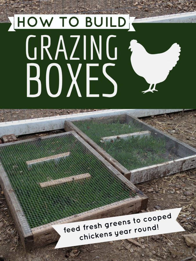 DIY building chicken grazing boxes that keep greens available to cooped chickens