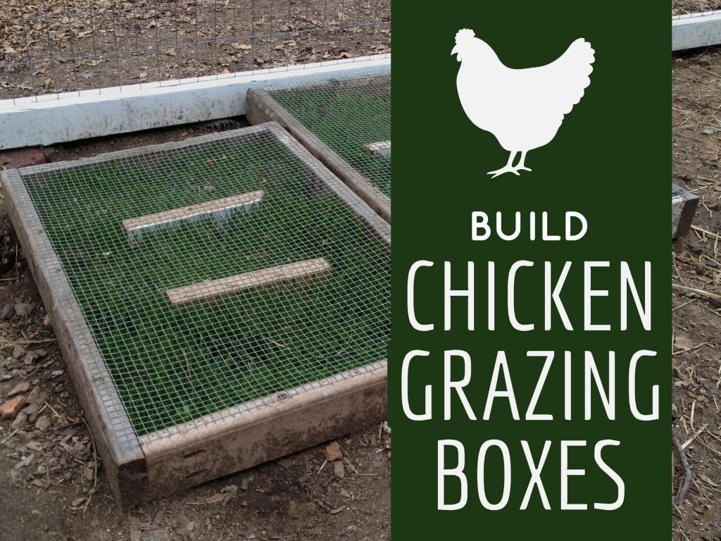 Build These Chicken Grazing Boxes And Grow Fresh Greens In