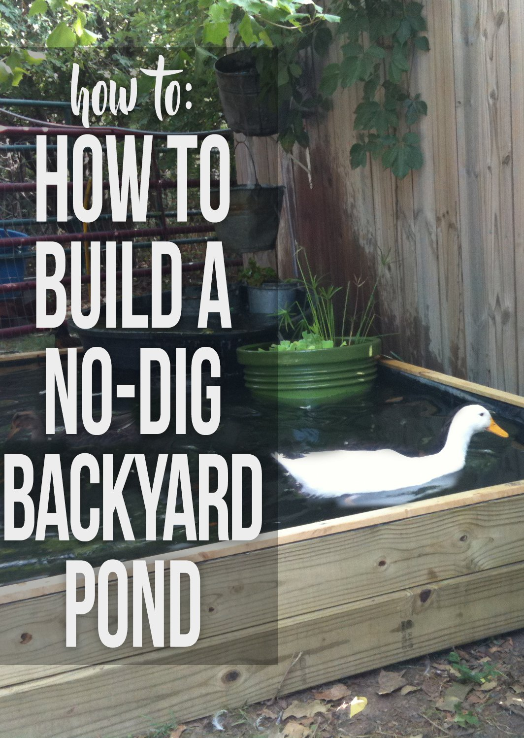 Diy duck pond do it your self for Garden pond building instructions