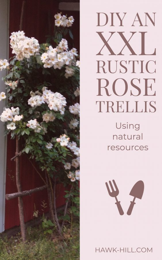 How to make a huge rustic rose trellis using free materials