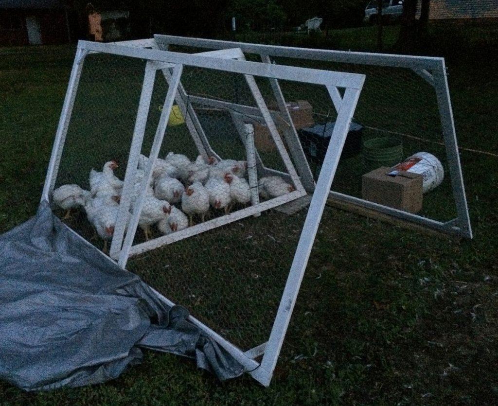DIY lightweight chicken tractor that folds flat for storage - Hawk-Hill.com