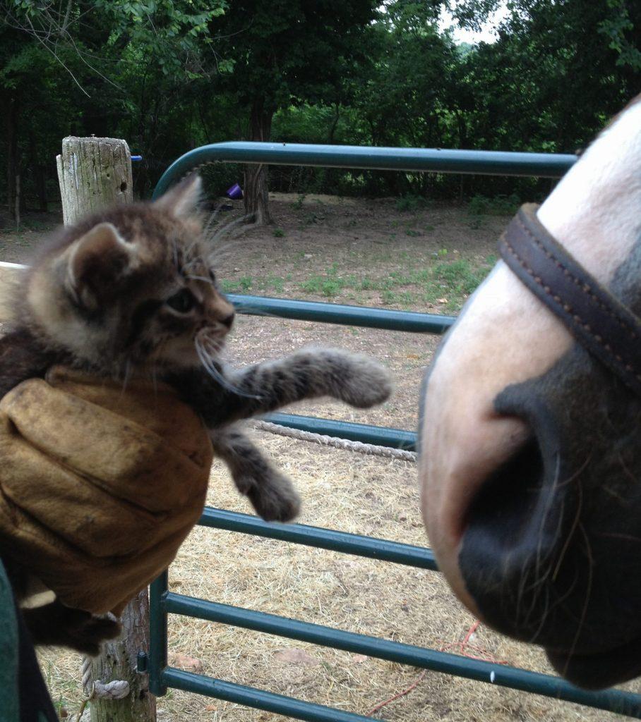 Kitten and horse meeting