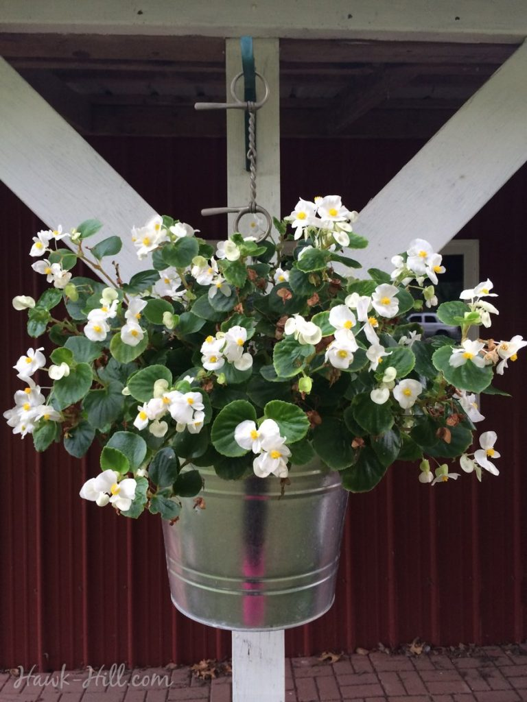 Galvanized Bucket used as Flower Pot and Hung from Porch with a Vintage Horse Bit