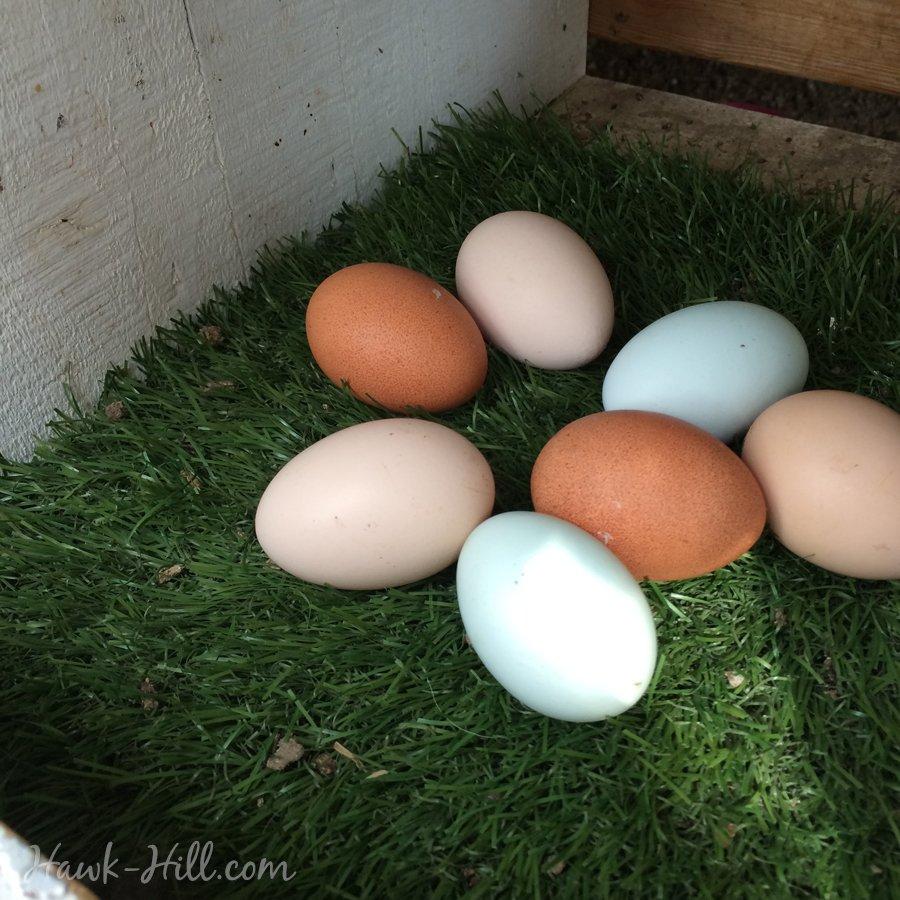 astroturf nesting mats for chicken coop