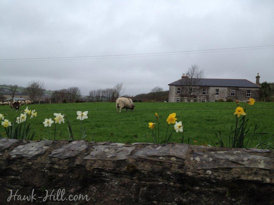 wexford ireland trip 788
