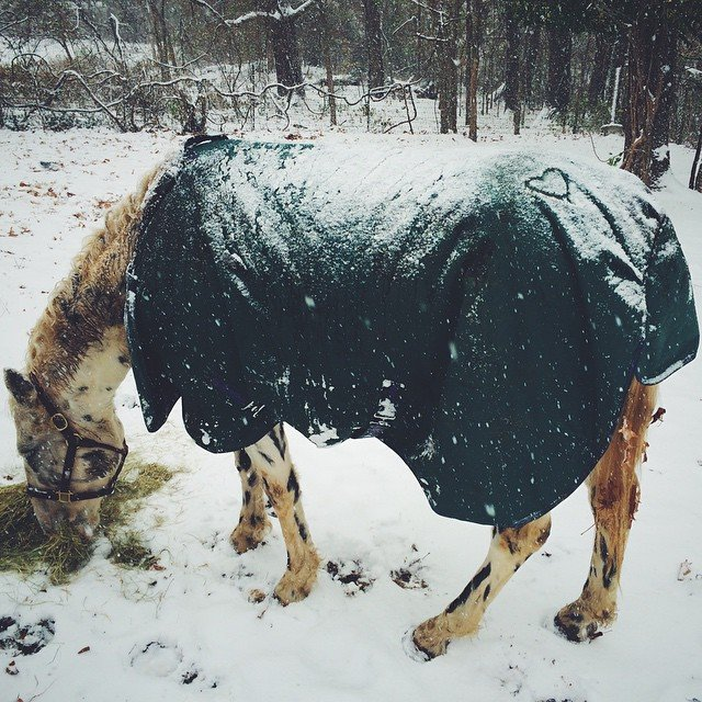Keeping horses healthy in winter weather requires lots of good quality hay and plenty of water for digesting it.