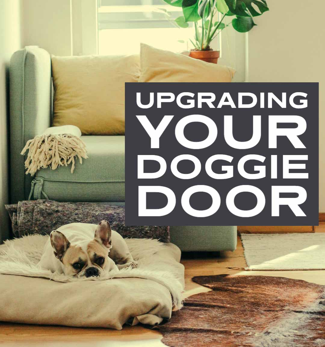upgrading a doggie door for bonus functions and style