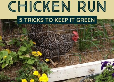 How to landscape your chicken coop run to keep it green and lush all summer long