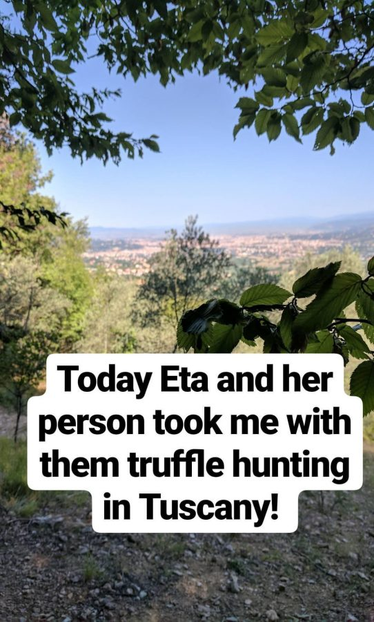 My adventure doing AirBnB's Truffle Hunting Experience in Florence Italy