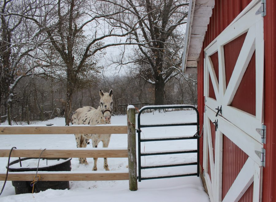 if a winter storm cuts power, plan ahead so your horses can have clean, thawed drinking water