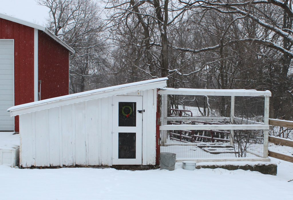 Insulation, waterproofing, and rebuilding the run were the goals of the first season rehabbing this chicken coop. Later nesting boxes were added to this wall.