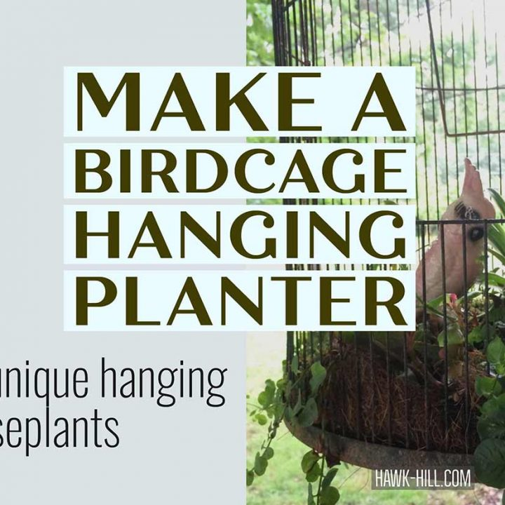 How to make a hanging planter for unique houseplants using a vintage birdcage