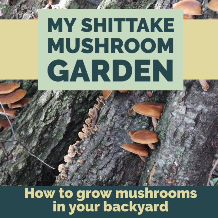 how to grow your own mushrooms