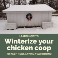 Winterizing your chicken coop takes just a few simple, affordable steps but results in continued egg production year-round even in cold regions.