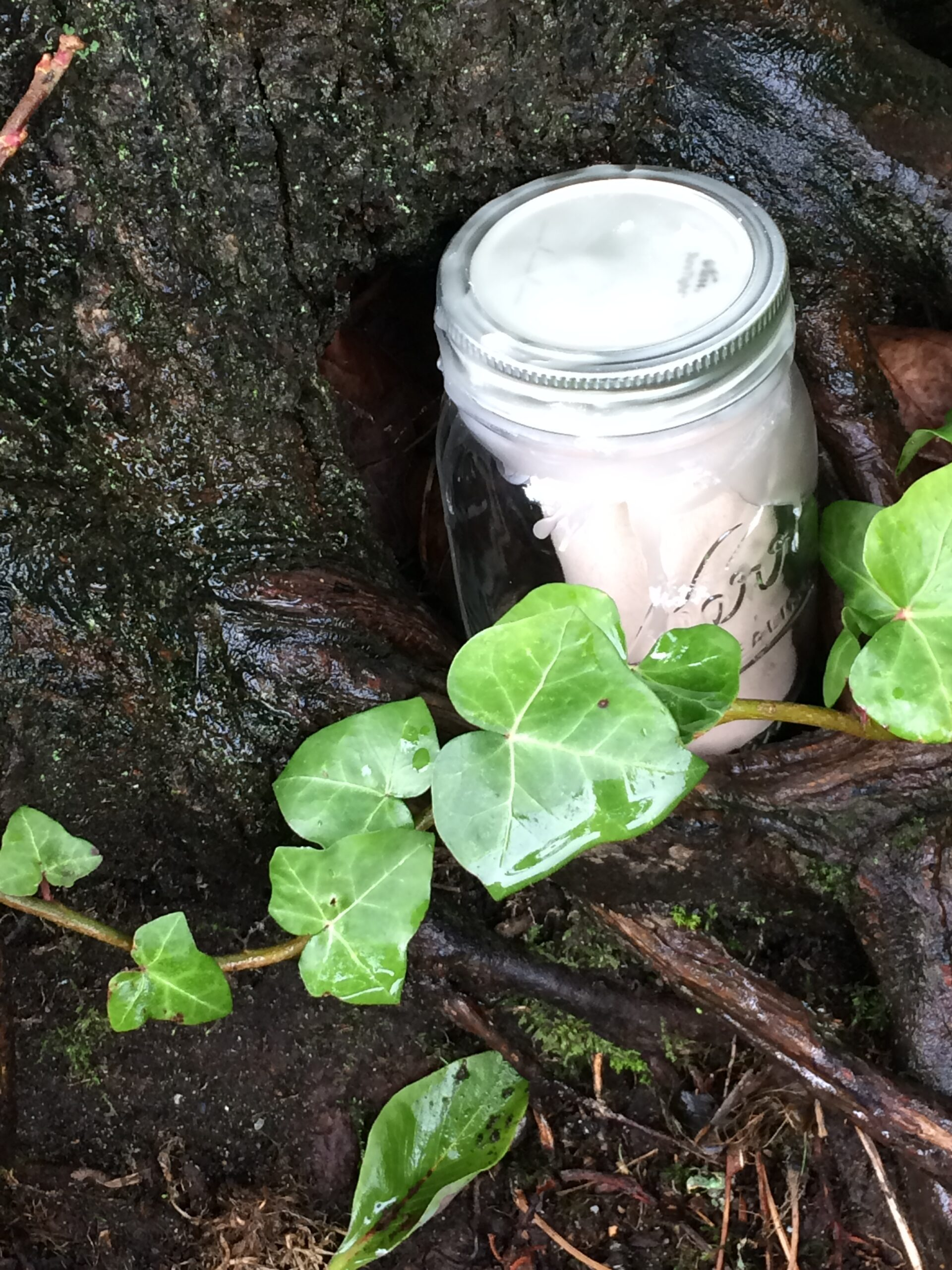 mason jar hidden in tree hollow