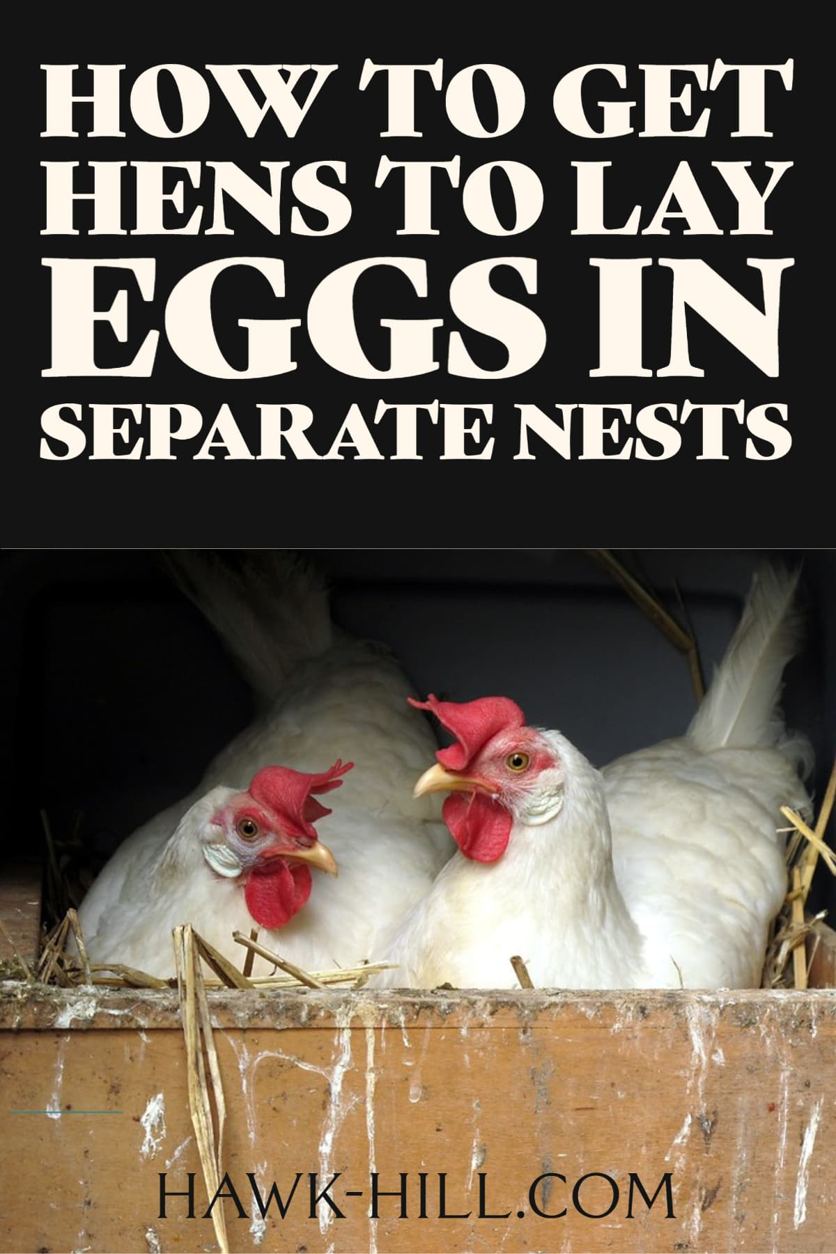 Tips for increasing egg production and decreasing egg breakage by discouraging nest-sharing