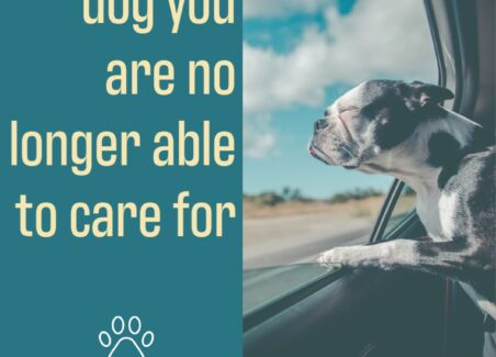 How to ethically rehome a dog when you are no longer able to care for it,