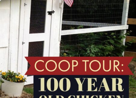 Tour 100 year old coop Copy (1)