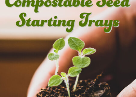 Making DIY compostable seed starting trays is an important sustainable gardening practice to learn as you grow a flower or vegetable garden.