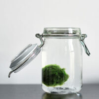 a kid-craft friendly simple tutorial for how to make a Marimo moss ball terrarium on a budget.