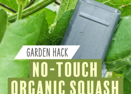 squash bug control method