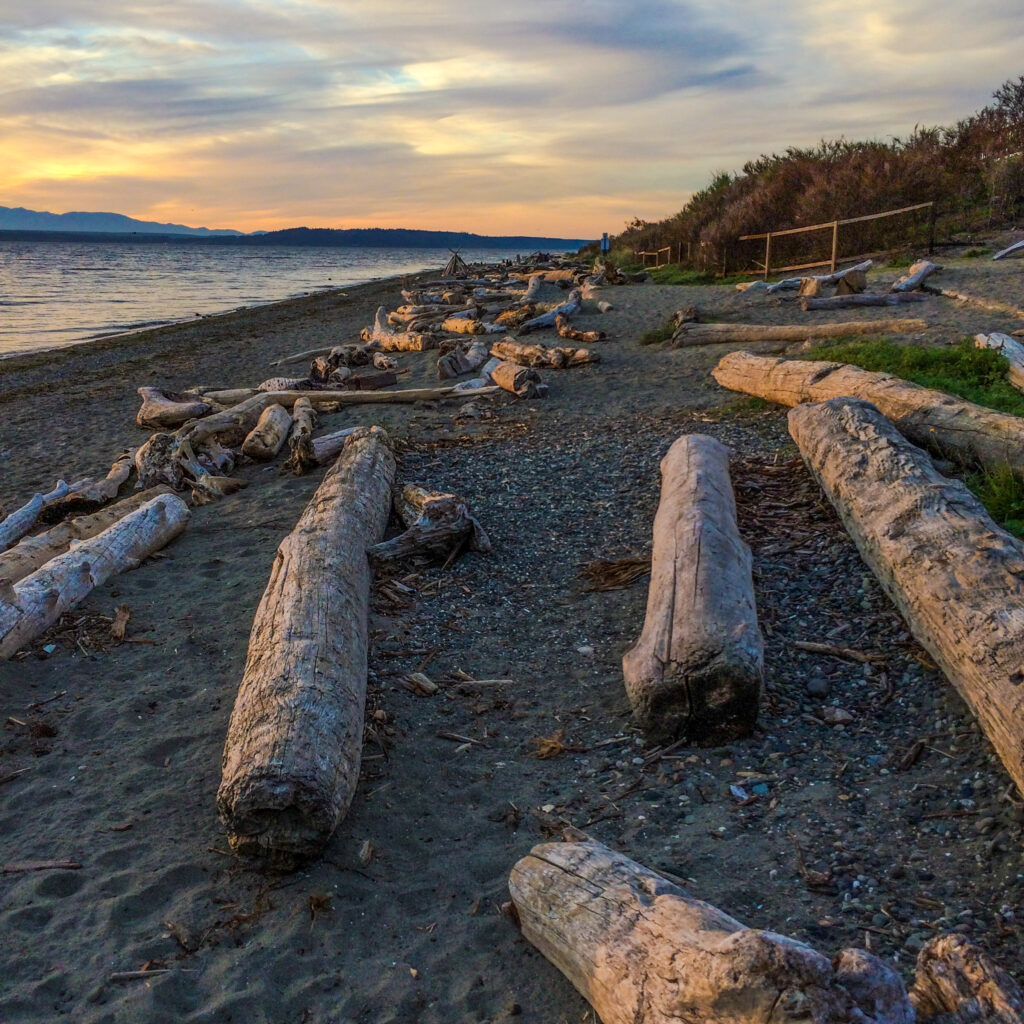Driftwood logs on the beach in Washington state.