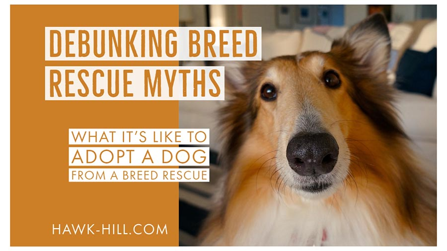 Debunking breed rescue myths what it's like to adopt a dog from a breed rescue